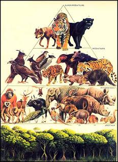 Ekologi Dan Ekosistem Younie S Kingdom